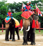 Elephant and Crocodile Show (Samphan)