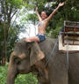 Elephant Trekking Koh Chang ( 2 Hours )