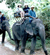 Eco Safari Tour Elephant Trekking Ox-Cart Riding Day Trips