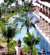 Adamas Resort & Spa Phuket