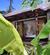 The Sundays Sanctuary Resort & Spa Koh Samui