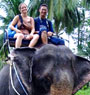 Sea Safari Tour + Elephant by big boat ( Fullday )